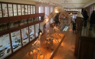 Museum_d'Histoire_Naturelle_(Nantes)